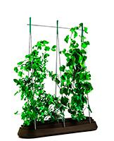 Грядки для растений
