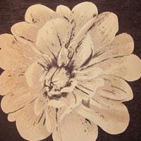Шенилл - Палома - 10 категория 339