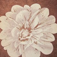 Шенилл - Палома - 10 категория 248